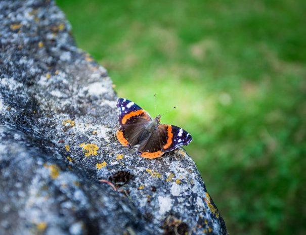 Papillon dans le parc de Meillant
