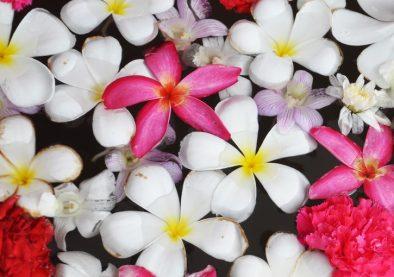 fleur pour atelier senteur à Meillant